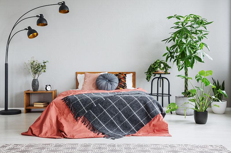 Không nên đặt cây cảnh ngay đầu giường ngủ