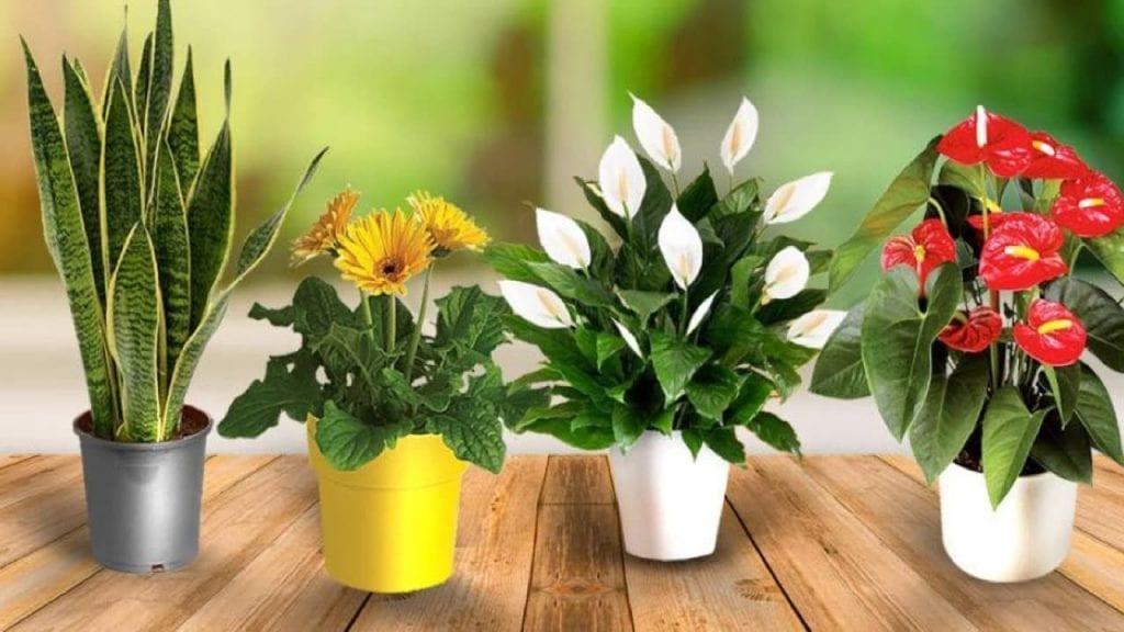 Những loài cây thuộc hê CAM khuyến cáo nên đặt trong phòng ngủ