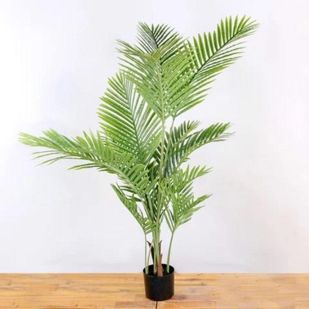 Nên trồng cây Cau Cảnh trong phòng ngủ